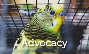 Lucys Project - core strategy Advocacy